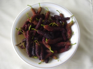 Long_Mulberry